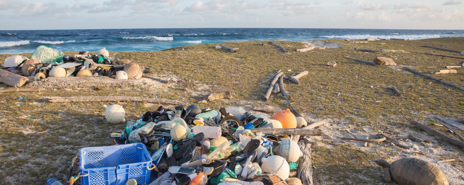 Aldabra trash on beach